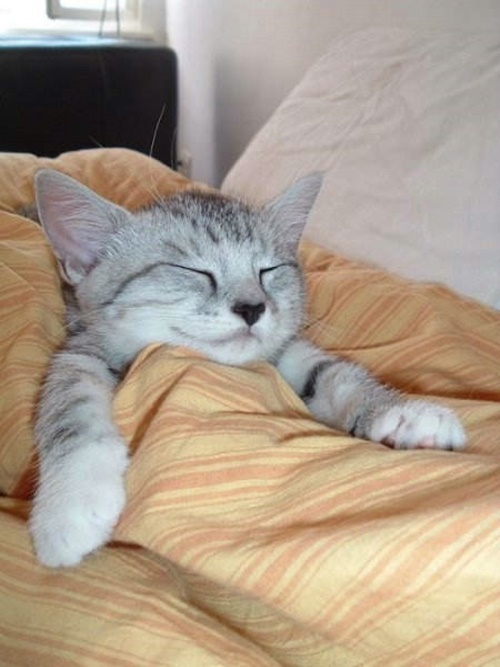 cute-sleeping-face006cat