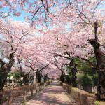 【ポケモンGO】4月6日にポケモン巣変更が濃厚!春の花見シーズン突入で気持ち良く出かけられるぞ!