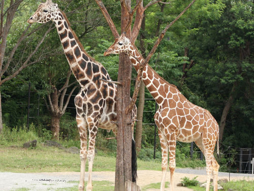 【ポケモンGO】ジムに動物園がオープン!?空気を読めばこんな素敵なこともおきるんやでwwwwwwww