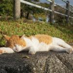 【ポケモンGO】ミニリュウが起こした奇跡!?一週間行方不明だった猫を川で発見したんだが!