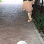 【ポケモンGO画像】 次回予告『澤村ショック!海老原君の裏切り』ほんとにそれっぽくてワロタwwwwww