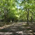 【ポケモンGO】代々木公園のワンリキー祭りが終了!劣化版ルギアの巣へ大暴落wwwwwww
