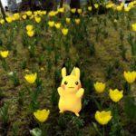 【ポケモンGO】ポケモンAR映え写真続々!!「#PokemonGOContest」で名写真投稿!!